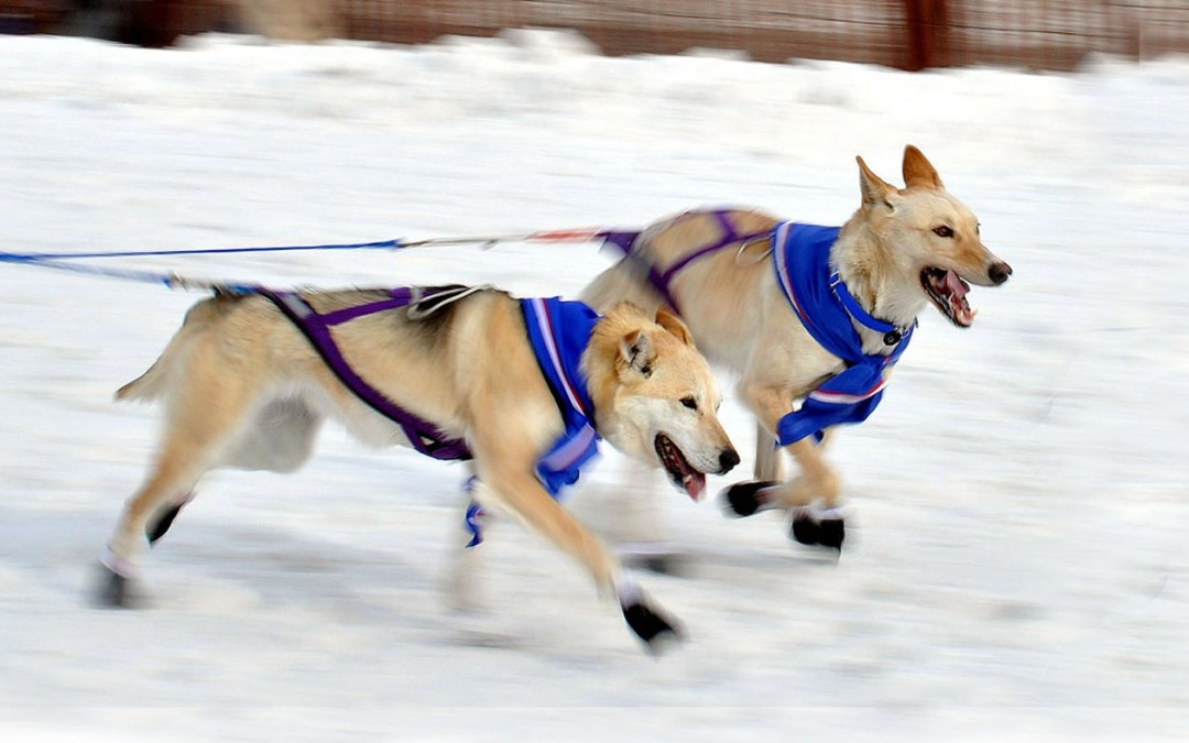 Iditarod Start Adventure Tour